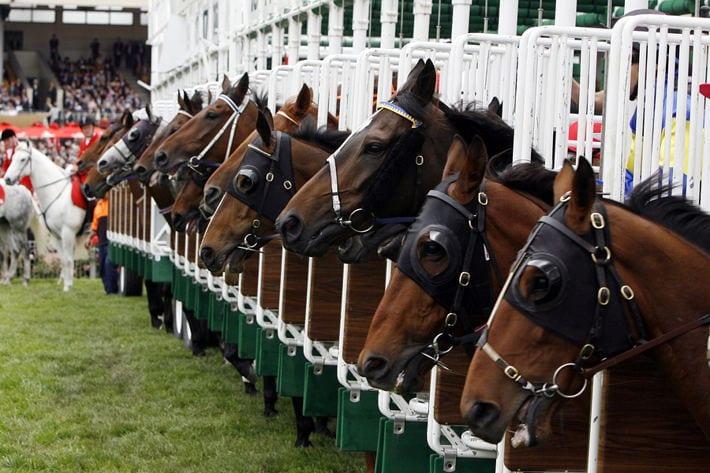 Horses at Starting Gate