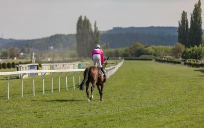 Horse Winning Race