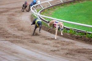 East anglian greyhound derby betting keeneland rijk worden met bitcoins stock
