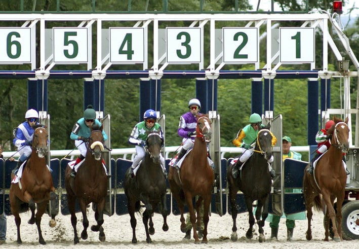 Horse Race Starting Gates