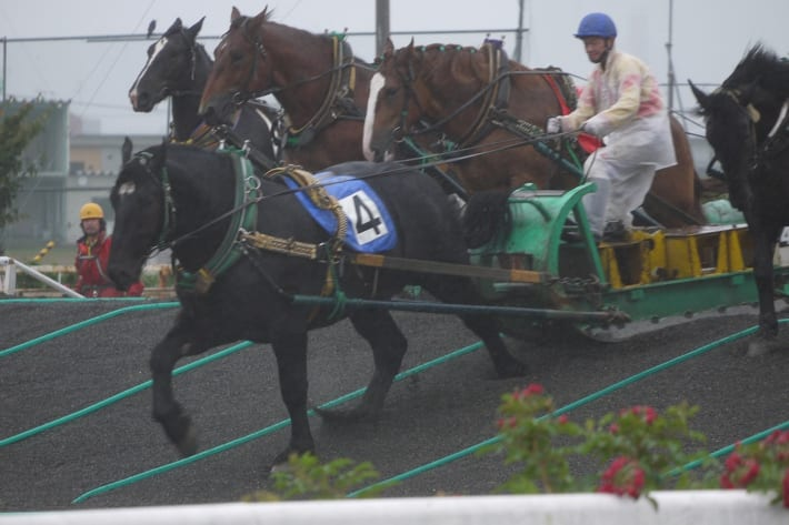 Ban'ei Horse Racing in Obihiro, Japan
