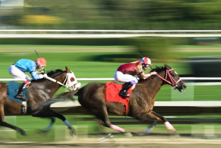 Horses blurred