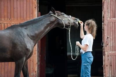 Young horse trainer