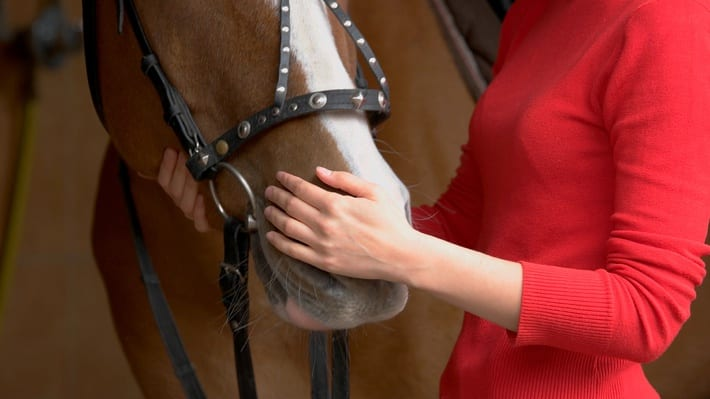 Woman trainer with horse