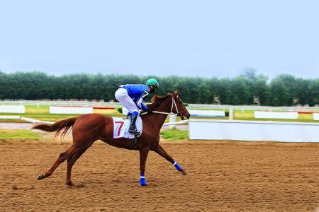Horse jockey rider